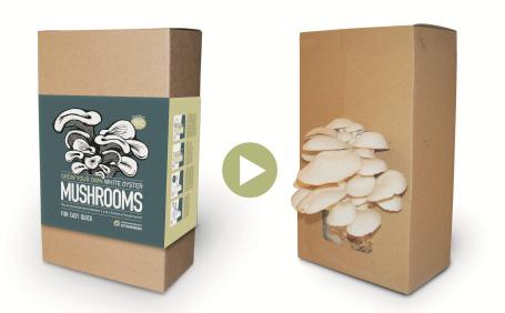 The Mushroom Factory | Home
